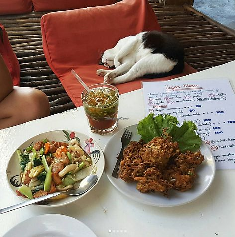 """Photo of Babaloo Restaurant and Uma's Kitchen  by <a href=""""/members/profile/sarahssoares"""">sarahssoares</a> <br/>Food and cat <br/> September 14, 2017  - <a href='/contact/abuse/image/57573/304483'>Report</a>"""