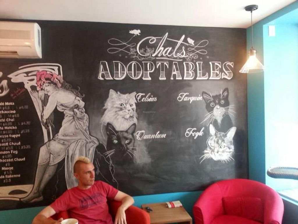 """Photo of CLOSED: Venosa Cafe  by <a href=""""/members/profile/yupsate"""">yupsate</a> <br/>Chalk drawings of the adoptable cats at Cafe Venosa! 3 of these guys already have permanent homes lined up! <br/> July 8, 2015  - <a href='/contact/abuse/image/58382/108562'>Report</a>"""