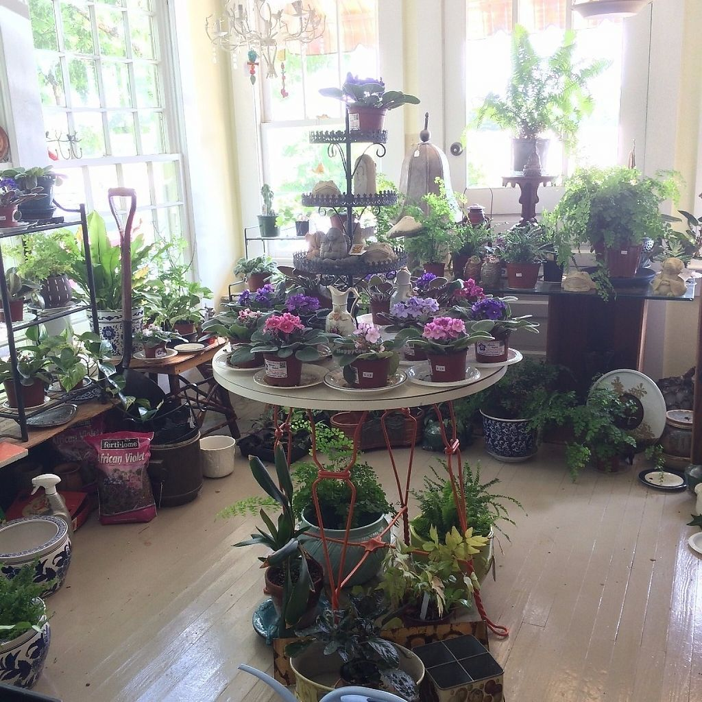 """Photo of Mooney's Market and Emporium  by <a href=""""/members/profile/KatieBush"""">KatieBush</a> <br/>mooneys sells all kinds of stuff. plant room <br/> June 6, 2017  - <a href='/contact/abuse/image/59684/266422'>Report</a>"""