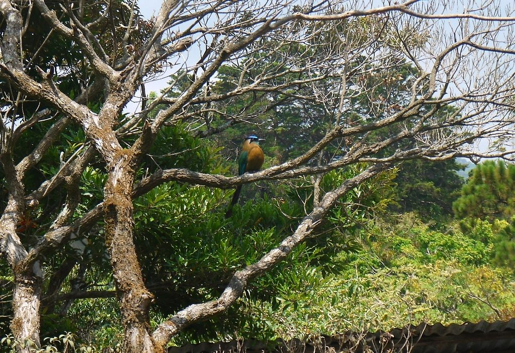 """Photo of Paz y Flora - Soda Passiflora  by <a href=""""/members/profile/ErinBveggie"""">ErinBveggie</a> <br/>beautiful bird that apparently has been hanging around the restaurant for four generations <br/> April 21, 2016  - <a href='/contact/abuse/image/59850/192612'>Report</a>"""