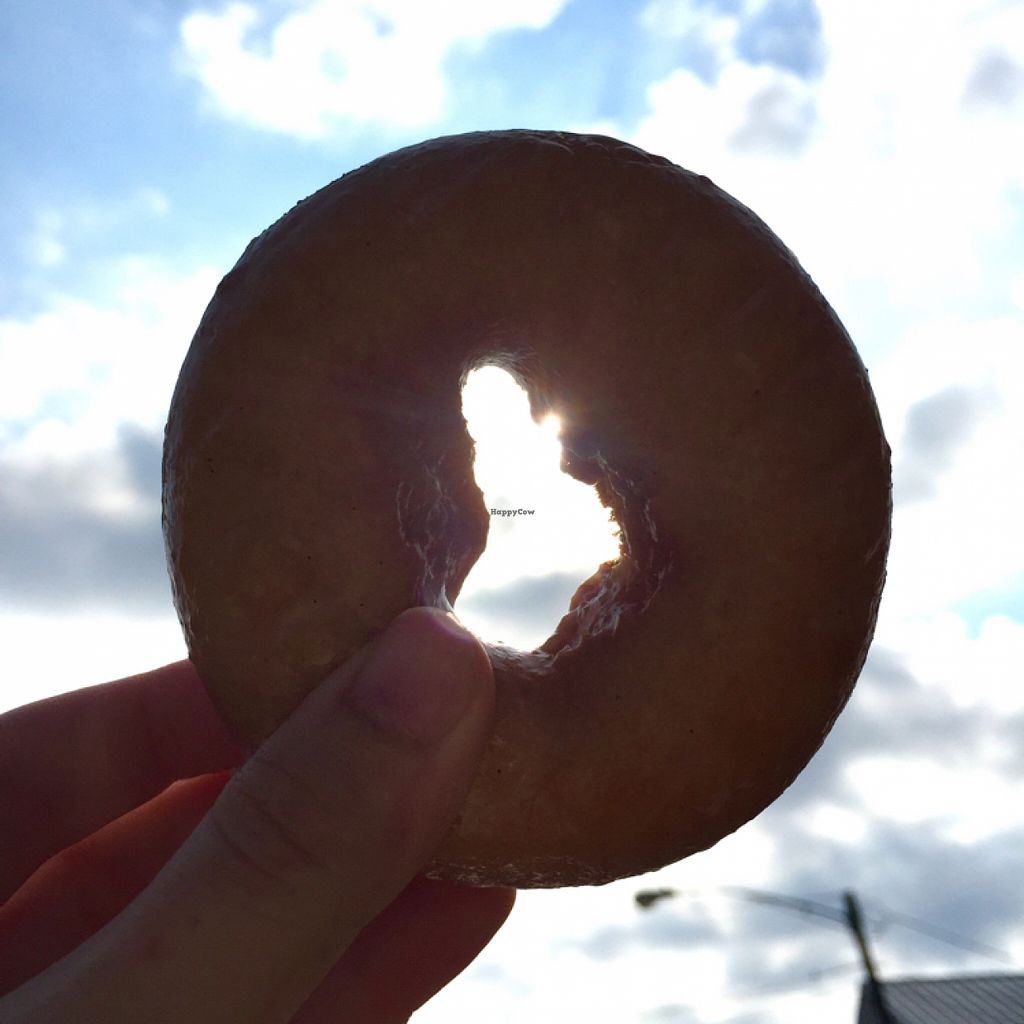 """Photo of Hugs and Donuts  by <a href=""""/members/profile/freshvegfakecheezy"""">freshvegfakecheezy</a> <br/>glazed cake donut <br/> November 1, 2015  - <a href='/contact/abuse/image/60227/123456'>Report</a>"""