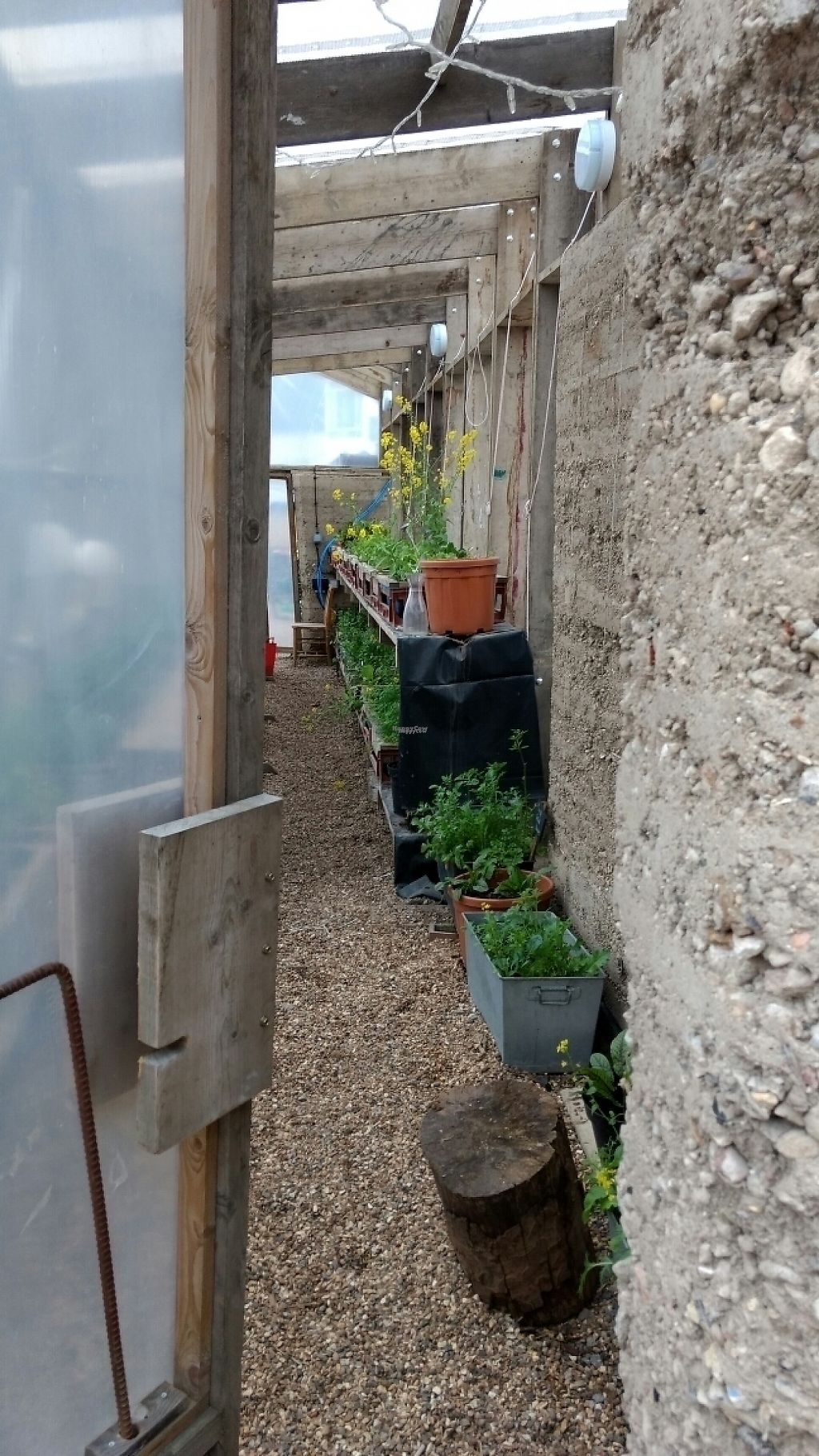 """Photo of Skip Garden Kitchen  by <a href=""""/members/profile/craigmc"""">craigmc</a> <br/>herbs <br/> March 18, 2017  - <a href='/contact/abuse/image/61559/237920'>Report</a>"""