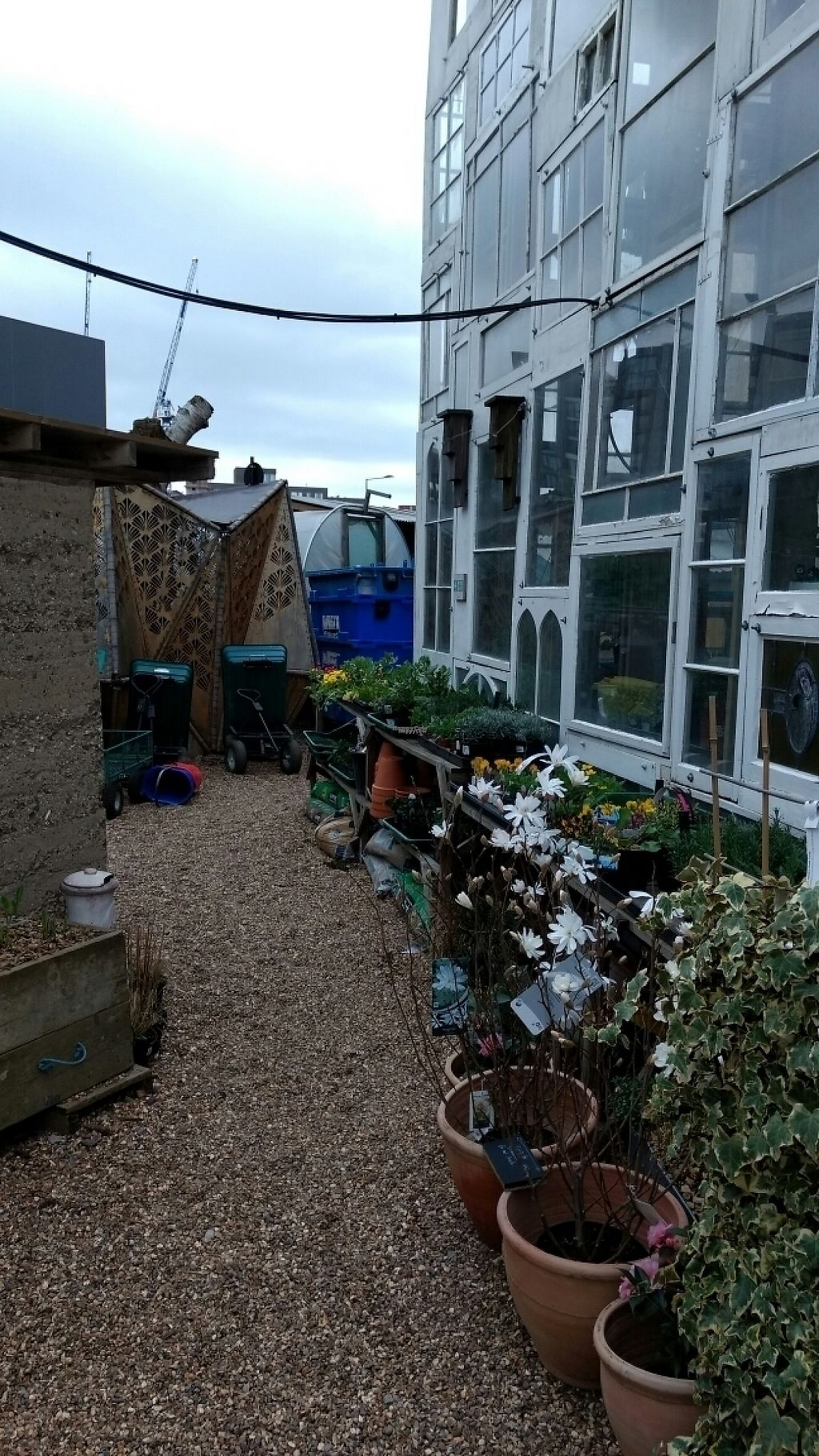 """Photo of Skip Garden Kitchen  by <a href=""""/members/profile/craigmc"""">craigmc</a> <br/>grow <br/> March 18, 2017  - <a href='/contact/abuse/image/61559/237924'>Report</a>"""