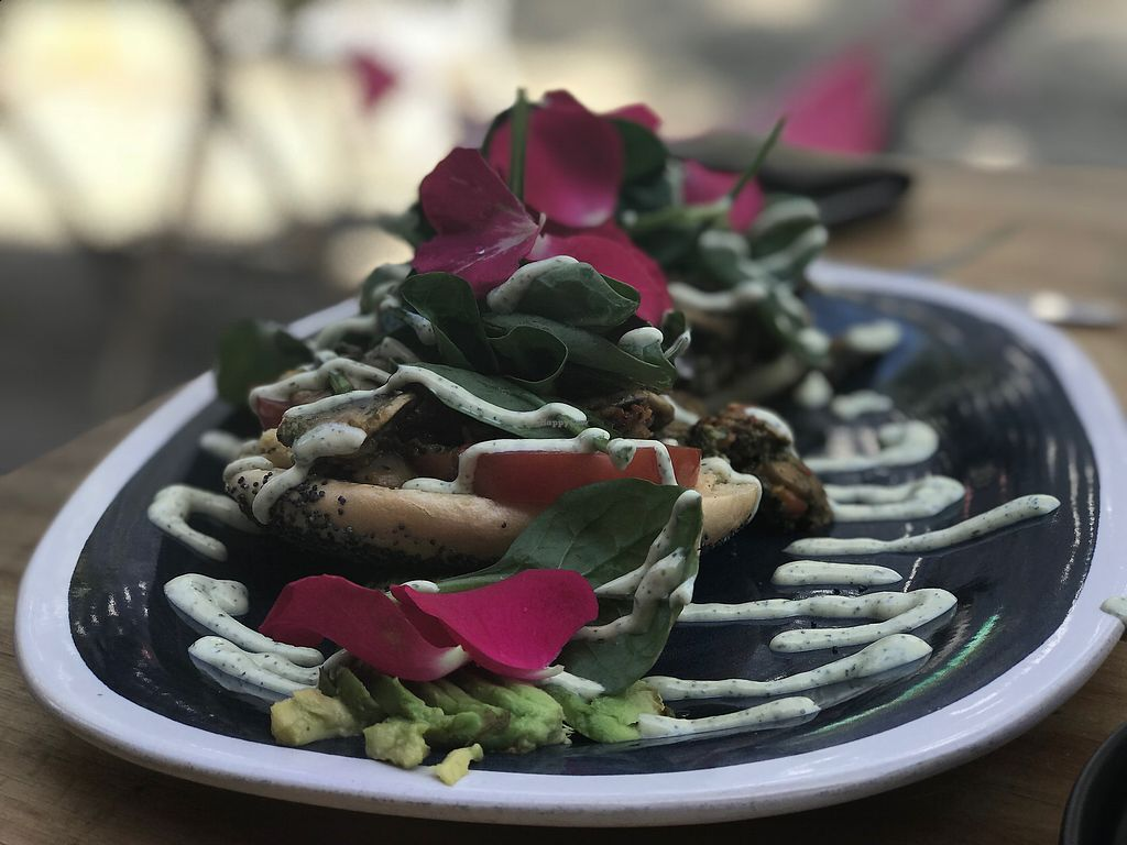 "Photo of Flora and Fauna  by <a href=""/members/profile/swainjohnson"">swainjohnson</a> <br/>Pesto Mushrooms <br/> January 9, 2018  - <a href='/contact/abuse/image/61666/344546'>Report</a>"