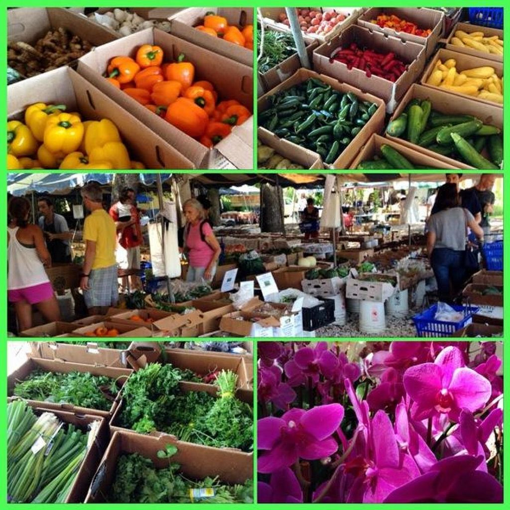 """Photo of Coconut Grove Farmer's Market  by <a href=""""/members/profile/Julie%20R"""">Julie R</a> <br/>A sampling of all the great stuff at the market <br/> August 11, 2014  - <a href='/contact/abuse/image/6290/76665'>Report</a>"""