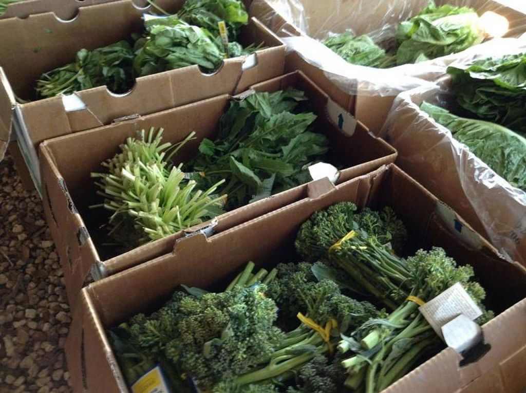 """Photo of Coconut Grove Farmer's Market  by <a href=""""/members/profile/Julie%20R"""">Julie R</a> <br/>Great, fresh, organic produce <br/> August 11, 2014  - <a href='/contact/abuse/image/6290/76667'>Report</a>"""