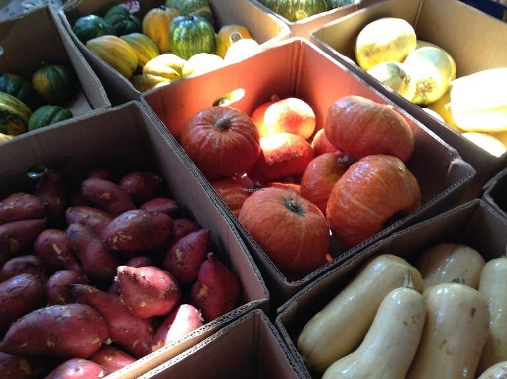"""Photo of Coconut Grove Farmer's Market  by <a href=""""/members/profile/Julie%20R"""">Julie R</a> <br/>Great, fresh, organic produce <br/> August 11, 2014  - <a href='/contact/abuse/image/6290/76670'>Report</a>"""
