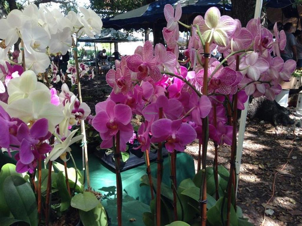"""Photo of Coconut Grove Farmer's Market  by <a href=""""/members/profile/Julie%20R"""">Julie R</a> <br/>Beautiful orchids sold at the market.  I bought one that was only $10 - in full bloom.  Beautiful <br/> August 11, 2014  - <a href='/contact/abuse/image/6290/76671'>Report</a>"""