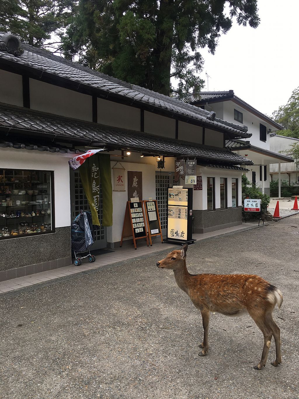 """Photo of Rokumeien  by <a href=""""/members/profile/ryannm"""">ryannm</a> <br/>The deer love it too! <br/> September 18, 2017  - <a href='/contact/abuse/image/65065/305562'>Report</a>"""