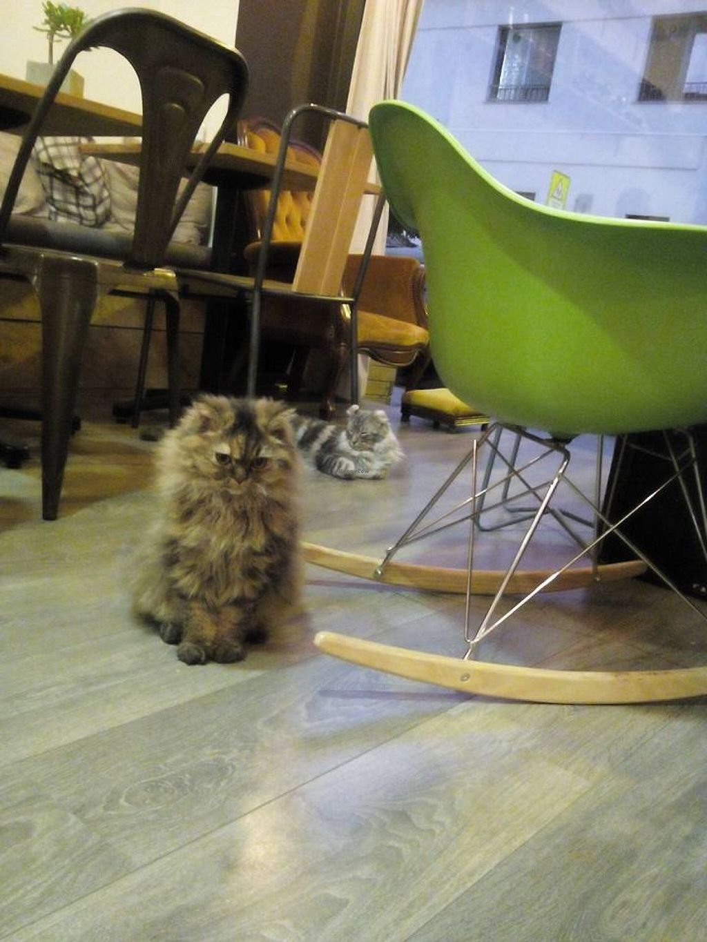 """Photo of La Ronronnerie  by <a href=""""/members/profile/violainous"""">violainous</a> <br/>Evolie and Leon, two of the cafe's cats <br/> November 29, 2015  - <a href='/contact/abuse/image/66395/126519'>Report</a>"""