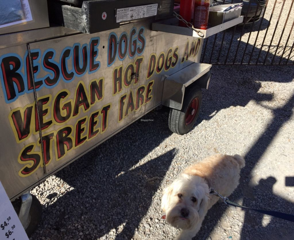 "Photo of Rescue Dogs - Food Cart  by <a href=""/members/profile/skipperkt"">skipperkt</a> <br/>vegan dog at vegan dogs <br/> March 26, 2016  - <a href='/contact/abuse/image/66512/141447'>Report</a>"