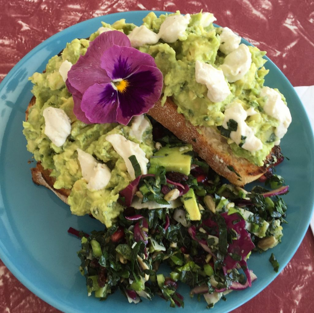 """Photo of Retro's Cafe 55  by <a href=""""/members/profile/mutant%20bean"""">mutant bean</a> <br/>smashed avocado w/ cashew cheese  <br/> December 16, 2015  - <a href='/contact/abuse/image/67037/128749'>Report</a>"""