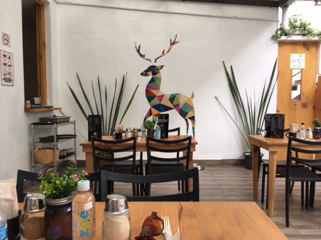 """Photo of Vegan Ville  by <a href=""""/members/profile/Sooz"""">Sooz</a> <br/>Delightful vegan place <br/> August 7, 2016  - <a href='/contact/abuse/image/67275/166702'>Report</a>"""