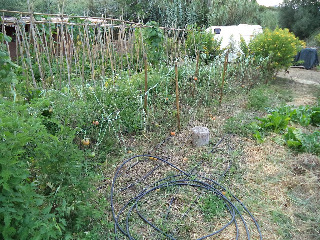 """Photo of Quinta dos 7 Nomes  by <a href=""""/members/profile/BioVeggy30"""">BioVeggy30</a> <br/>Growing tomatoes right next to the store <br/> August 28, 2017  - <a href='/contact/abuse/image/68007/298343'>Report</a>"""