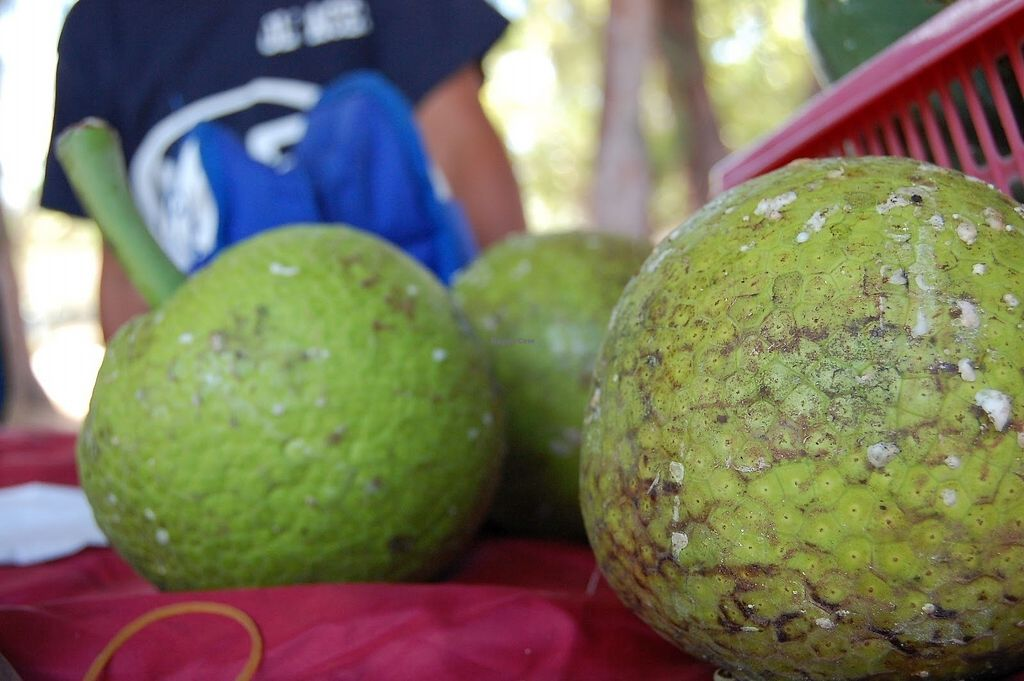 """Photo of Saipan Sabalu Market  by <a href=""""/members/profile/community5"""">community5</a> <br/>Breadfruit <br/> June 13, 2017  - <a href='/contact/abuse/image/6850/268831'>Report</a>"""