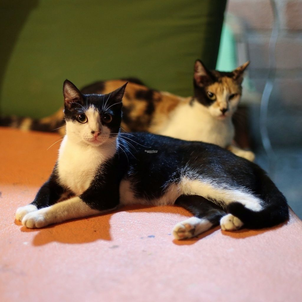 """Photo of Casita Ecovegana de Zihuatanejo Cooperativa  by <a href=""""/members/profile/DaniellePetze"""">DaniellePetze</a> <br/>Some of the adopted kitties on the property <br/> March 30, 2017  - <a href='/contact/abuse/image/68578/242682'>Report</a>"""