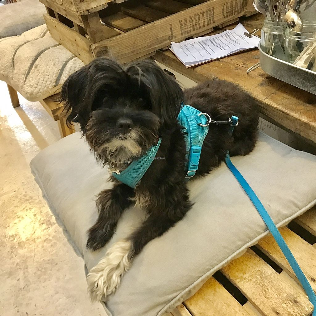 """Photo of Cupcakes and Shhht  by <a href=""""/members/profile/kezia"""">kezia</a> <br/>This vegan cafe is dog friendly  <br/> October 26, 2017  - <a href='/contact/abuse/image/69166/318991'>Report</a>"""