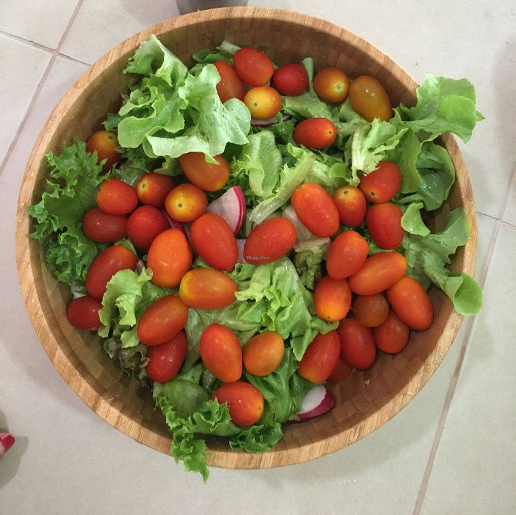 """Photo of Art of Juice  by <a href=""""/members/profile/Art%20of%20Juice"""">Art of Juice</a> <br/>fresh salad  <br/> March 3, 2016  - <a href='/contact/abuse/image/70419/138691'>Report</a>"""