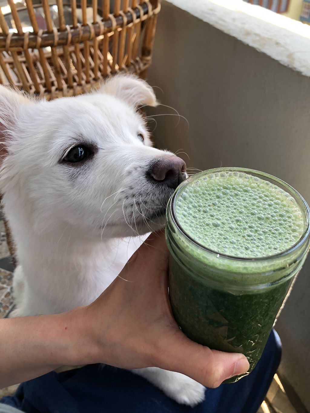 """Photo of Bliss Pure Foods  by <a href=""""/members/profile/KathrynSunantha"""">KathrynSunantha</a> <br/>Bliss superfood puppy—- MACA  <br/> March 5, 2018  - <a href='/contact/abuse/image/70969/367053'>Report</a>"""