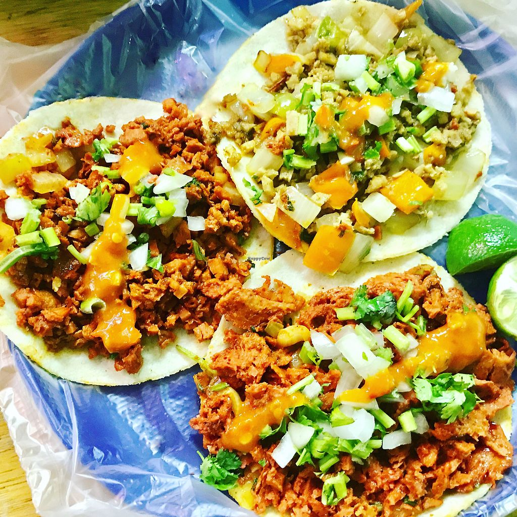 """Photo of Viko  by <a href=""""/members/profile/josephsuar"""">josephsuar</a> <br/>3 Street Tacos!  <br/> July 6, 2017  - <a href='/contact/abuse/image/71451/277035'>Report</a>"""