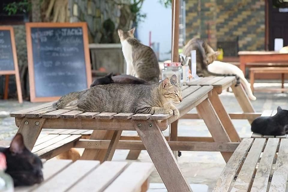"Photo of Jack's Cat Cafe  by <a href=""/members/profile/VanVeganHanoi"">VanVeganHanoi</a> <br/>Amazing place  <br/> October 30, 2017  - <a href='/contact/abuse/image/72185/320178'>Report</a>"
