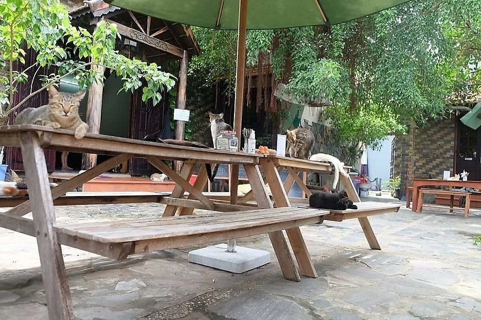 "Photo of Jack's Cat Cafe  by <a href=""/members/profile/VanVeganHanoi"">VanVeganHanoi</a> <br/>Amazing place  <br/> October 30, 2017  - <a href='/contact/abuse/image/72185/320179'>Report</a>"