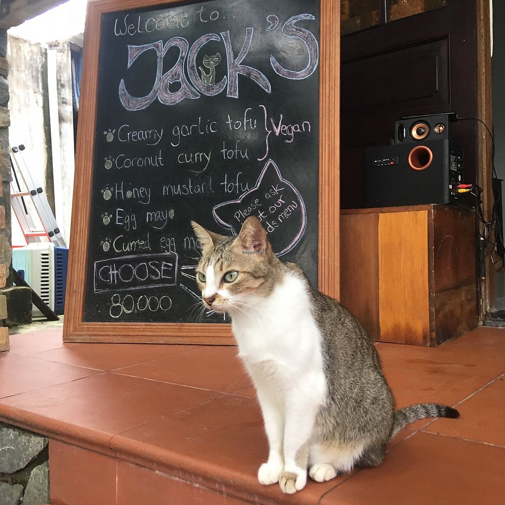 "Photo of Jack's Cat Cafe  by <a href=""/members/profile/BigVeegs"">BigVeegs</a> <br/>Jack's menu <br/> January 30, 2018  - <a href='/contact/abuse/image/72185/352681'>Report</a>"