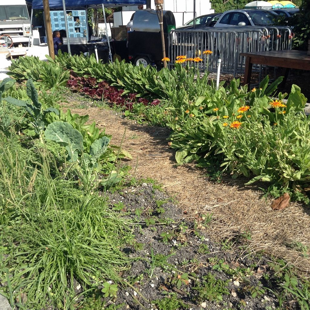 """Photo of Della Bowls - Food Truck  by <a href=""""/members/profile/Julie%20R"""">Julie R</a> <br/>The grow their own veggies and herbs behind their food truck.  I love that <br/> April 24, 2016  - <a href='/contact/abuse/image/72858/146168'>Report</a>"""
