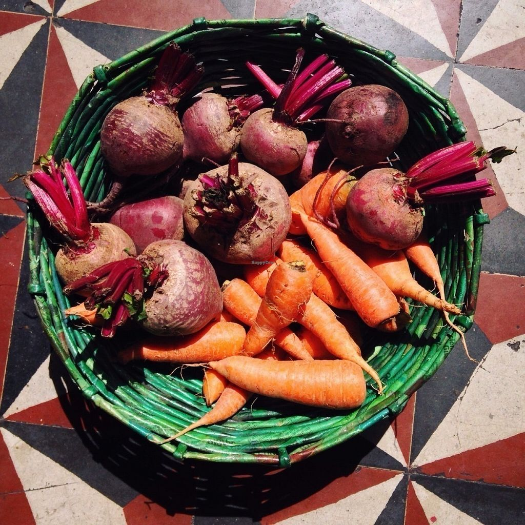 """Photo of La Casa de Cervantes  by <a href=""""/members/profile/Olenka"""">Olenka</a> <br/>Local organic beets and carrots from Byoearth that we use in our restaurant!  <br/> July 12, 2016  - <a href='/contact/abuse/image/73229/159482'>Report</a>"""