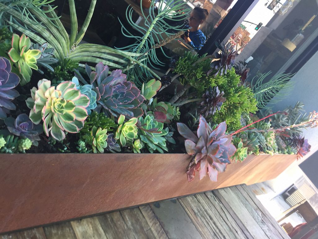 """Photo of EVE  by <a href=""""/members/profile/BohemianVeganGypsy"""">BohemianVeganGypsy</a> <br/>succulents outside <br/> March 30, 2017  - <a href='/contact/abuse/image/73584/242534'>Report</a>"""