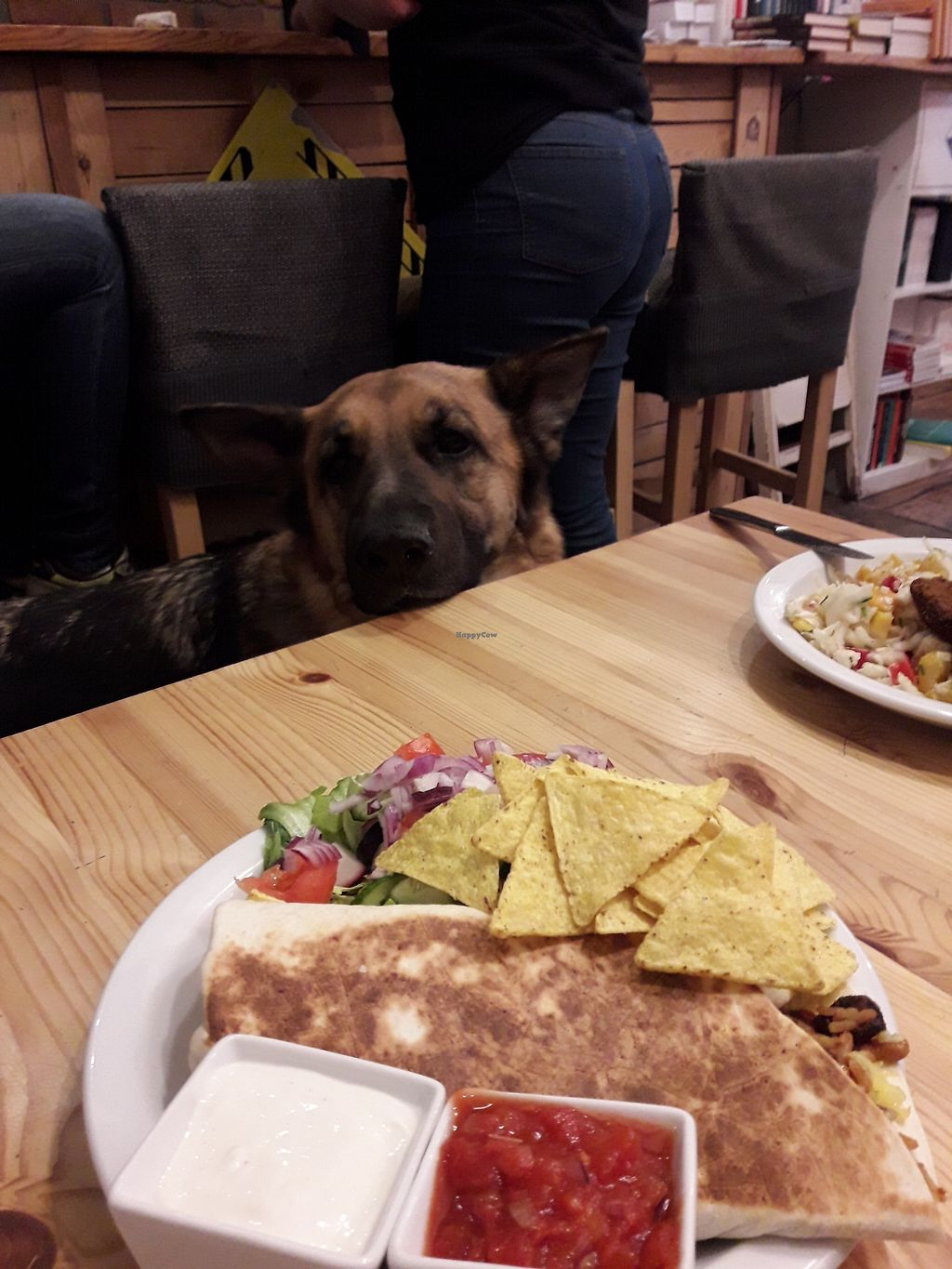 "Photo of Zemsta  by <a href=""/members/profile/DimitraPontikaki"">DimitraPontikaki</a> <br/>Burrito with dog company ??? <br/> March 24, 2018  - <a href='/contact/abuse/image/74854/375586'>Report</a>"