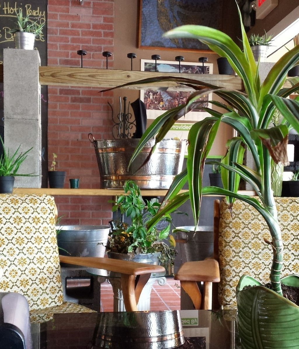 """Photo of Aloe Vera's Eatery  by <a href=""""/members/profile/American%20Vegan"""">American Vegan</a> <br/>Aloe Vera ambiance  <br/> July 16, 2016  - <a href='/contact/abuse/image/74918/209845'>Report</a>"""