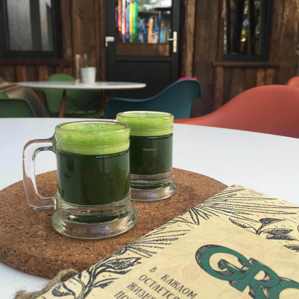 "Photo of Groot  by <a href=""/members/profile/Evgenia"">Evgenia</a> <br/>wheatgrass shots  <br/> September 1, 2017  - <a href='/contact/abuse/image/75619/299613'>Report</a>"
