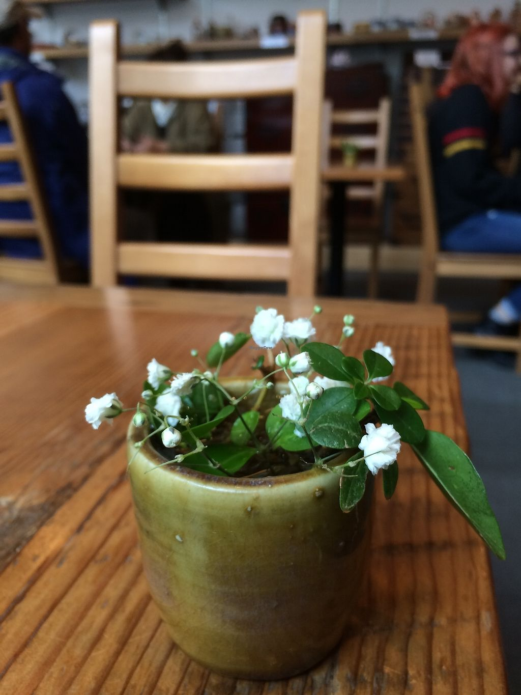 "Photo of Behind the Museum Cafe  by <a href=""/members/profile/Mdrutz"">Mdrutz</a> <br/>Lovely table top mini flowers <br/> October 17, 2017  - <a href='/contact/abuse/image/75653/316191'>Report</a>"
