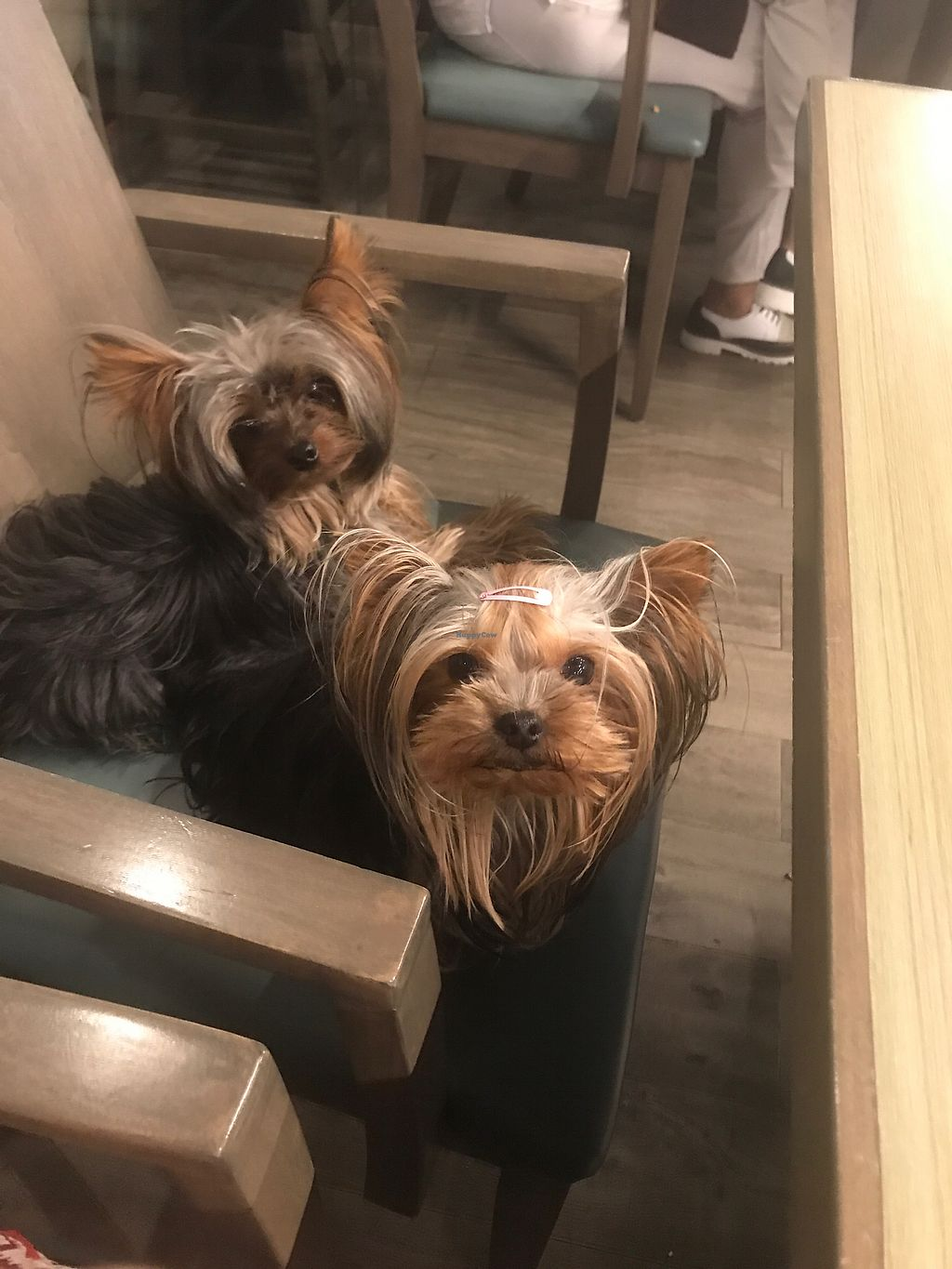 """Photo of Vegan Inc  by <a href=""""/members/profile/AlejandraRangel"""">AlejandraRangel</a> <br/>pet friendly too in a pet friendly mall  <br/> August 13, 2017  - <a href='/contact/abuse/image/75864/292436'>Report</a>"""