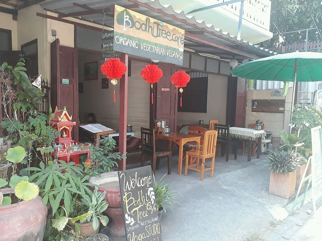 "Photo of Bodhi Tree Cafe 2  by <a href=""/members/profile/LilacHippy"">LilacHippy</a> <br/>Outside <br/> March 4, 2018  - <a href='/contact/abuse/image/76071/366430'>Report</a>"