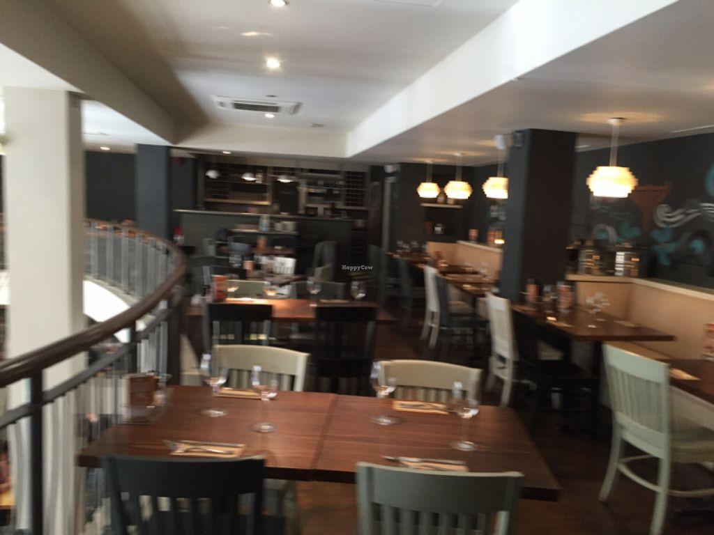 """Photo of Zizzi  by <a href=""""/members/profile/DonnaC"""">DonnaC</a> <br/>upstairs  <br/> July 30, 2016  - <a href='/contact/abuse/image/77383/163484'>Report</a>"""