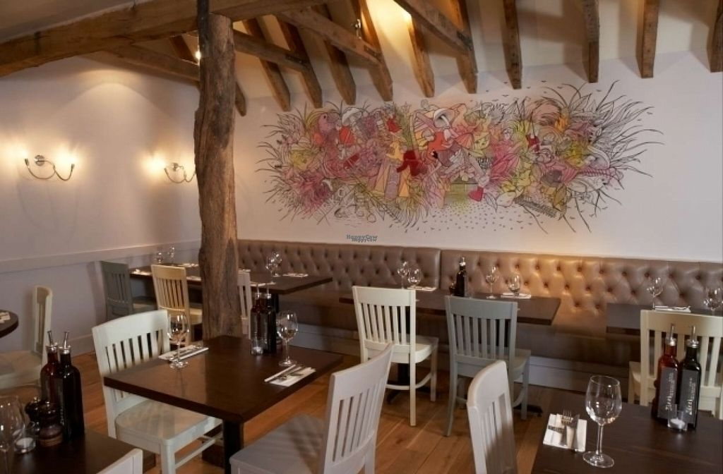 """Photo of Zizzi  by <a href=""""/members/profile/Meaks"""">Meaks</a> <br/>Zizzi <br/> August 18, 2016  - <a href='/contact/abuse/image/77398/169647'>Report</a>"""