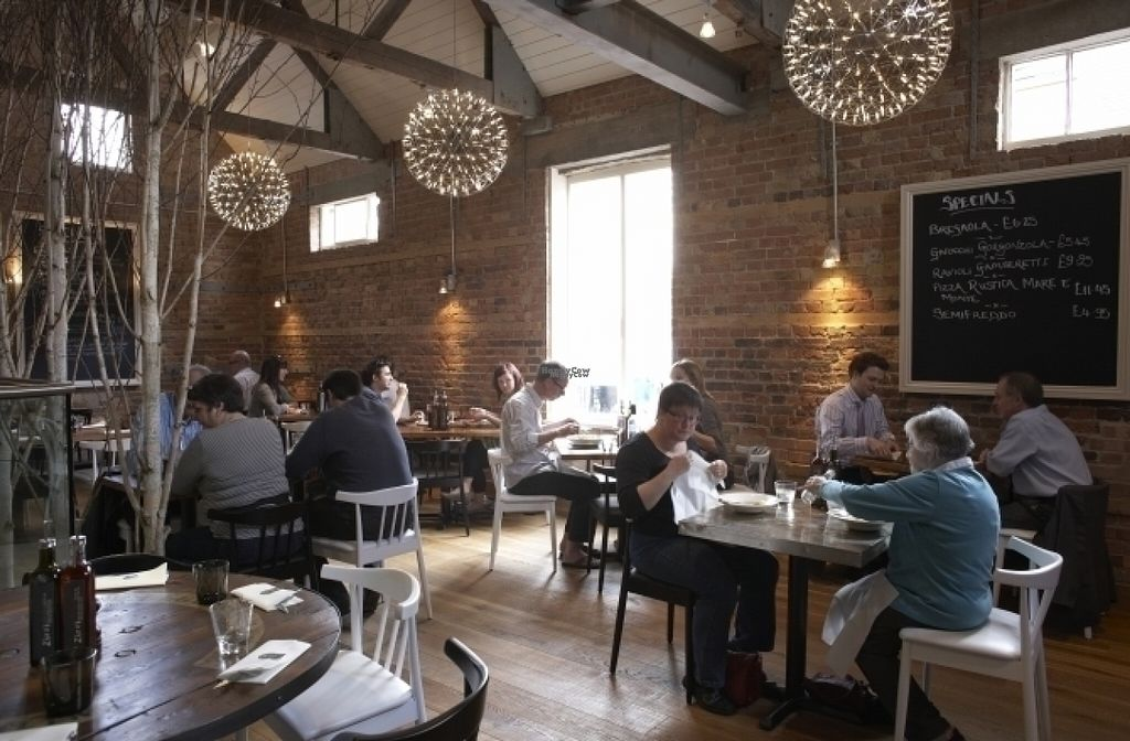 """Photo of Zizzi  by <a href=""""/members/profile/Meaks"""">Meaks</a> <br/>Zizzi <br/> August 18, 2016  - <a href='/contact/abuse/image/77420/169793'>Report</a>"""