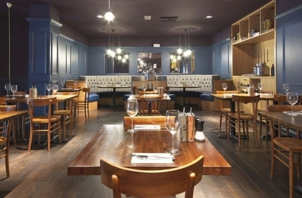 """Photo of Zizzi  by <a href=""""/members/profile/Meaks"""">Meaks</a> <br/>Zizzi <br/> August 18, 2016  - <a href='/contact/abuse/image/77457/169696'>Report</a>"""