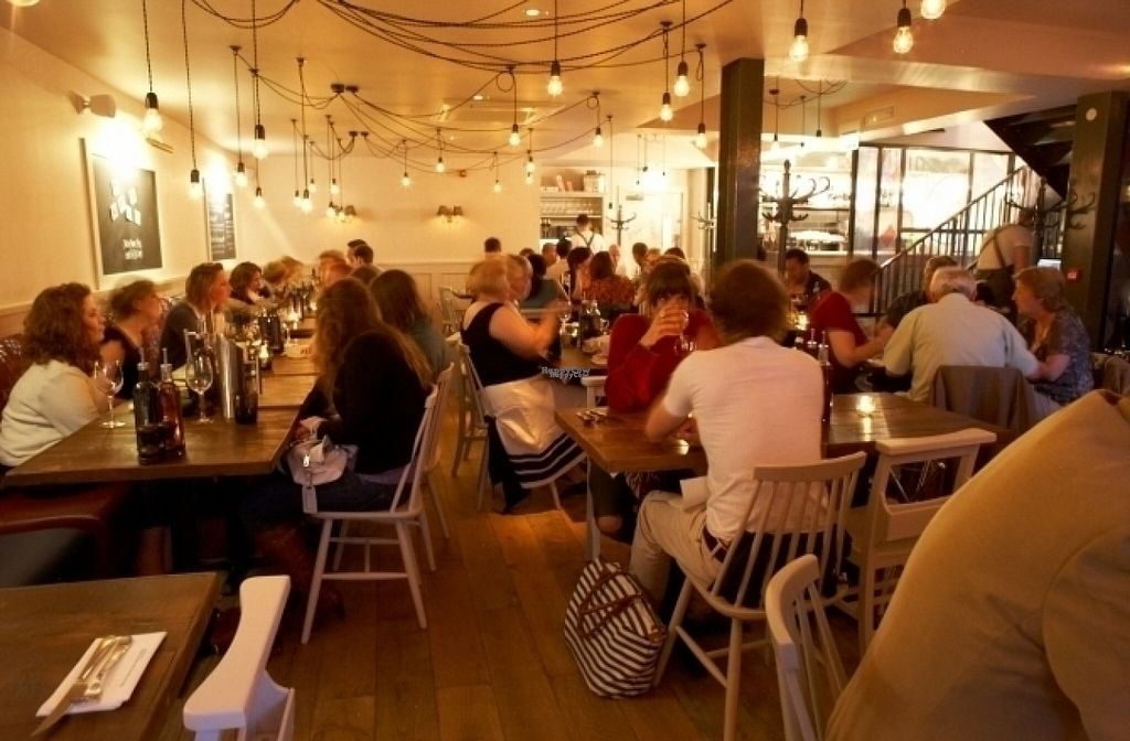 """Photo of Zizzi  by <a href=""""/members/profile/Meaks"""">Meaks</a> <br/>Zizzi <br/> August 18, 2016  - <a href='/contact/abuse/image/77527/169671'>Report</a>"""