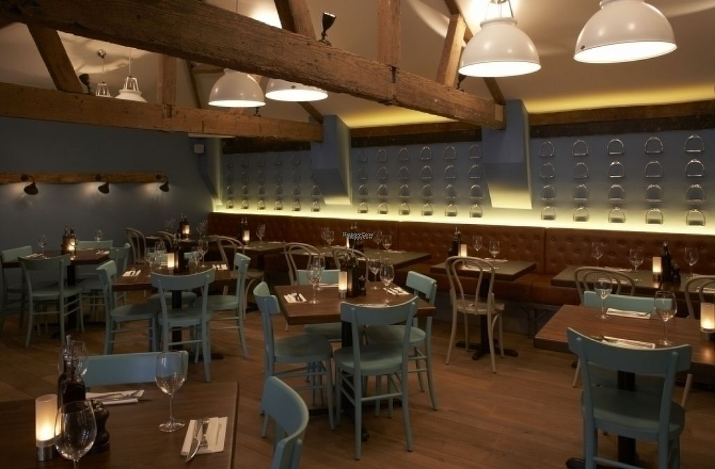 """Photo of Zizzi  by <a href=""""/members/profile/Meaks"""">Meaks</a> <br/>Zizzi <br/> August 18, 2016  - <a href='/contact/abuse/image/77560/169766'>Report</a>"""