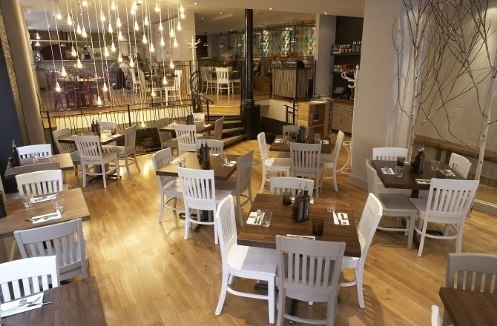 "Photo of Zizzi  by <a href=""/members/profile/Meaks"">Meaks</a> <br/>Zizzi <br/> August 18, 2016  - <a href='/contact/abuse/image/77562/169720'>Report</a>"