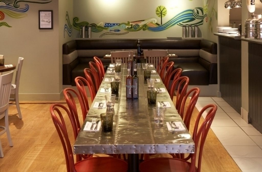 """Photo of Zizzi  by <a href=""""/members/profile/Meaks"""">Meaks</a> <br/>Zizzi <br/> August 19, 2016  - <a href='/contact/abuse/image/77572/170066'>Report</a>"""