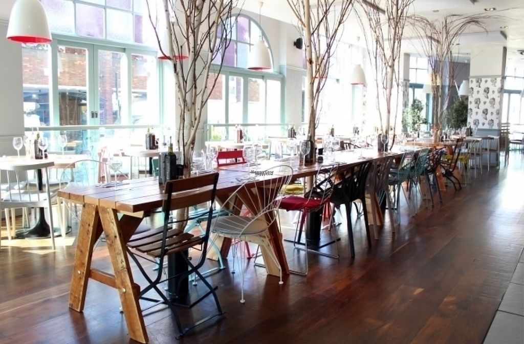 """Photo of Zizzi   by <a href=""""/members/profile/Meaks"""">Meaks</a> <br/>Zizzi  <br/> August 18, 2016  - <a href='/contact/abuse/image/77573/169762'>Report</a>"""