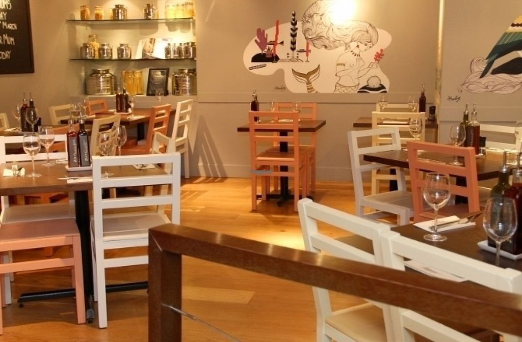 """Photo of Zizzi   by <a href=""""/members/profile/Meaks"""">Meaks</a> <br/>Zizzi  <br/> August 15, 2016  - <a href='/contact/abuse/image/77583/168915'>Report</a>"""