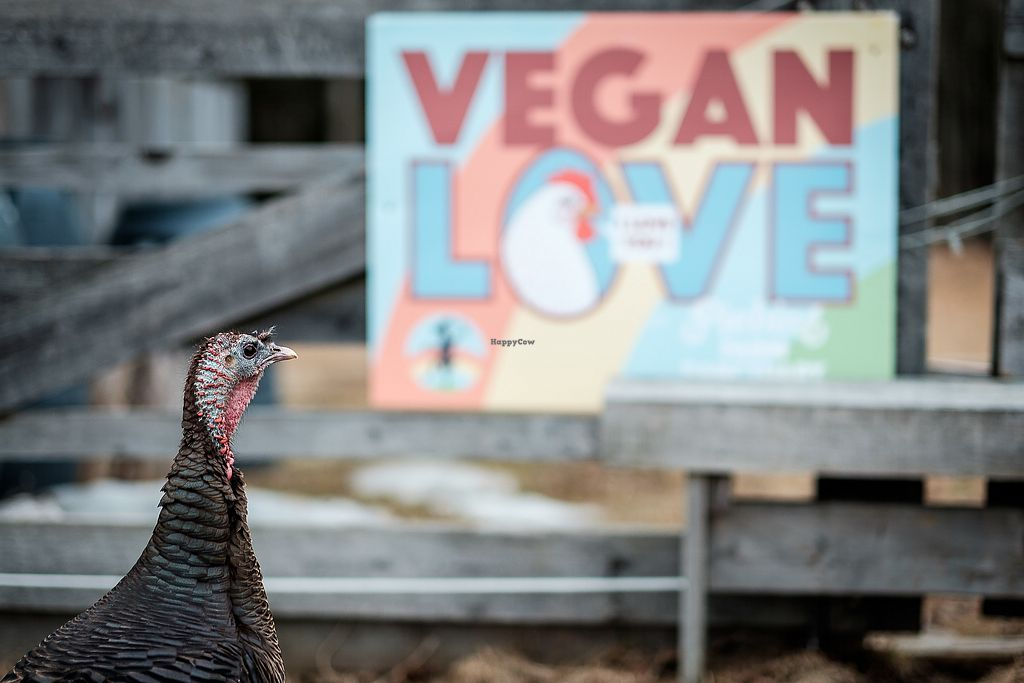 "Photo of Piebird Farm Sanctuary  by <a href=""/members/profile/shawnmoreton"">shawnmoreton</a> <br/>Vegan Love <br/> January 10, 2018  - <a href='/contact/abuse/image/77609/344868'>Report</a>"