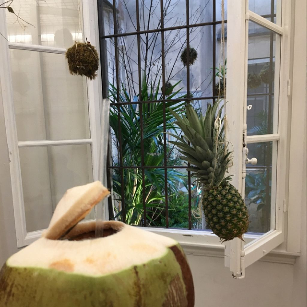 "Photo of #RAW  by <a href=""/members/profile/bangunubloksta"">bangunubloksta</a> <br/>delicious coconut from Thailand with a view to an inside garden! <br/> August 18, 2016  - <a href='/contact/abuse/image/78656/169664'>Report</a>"
