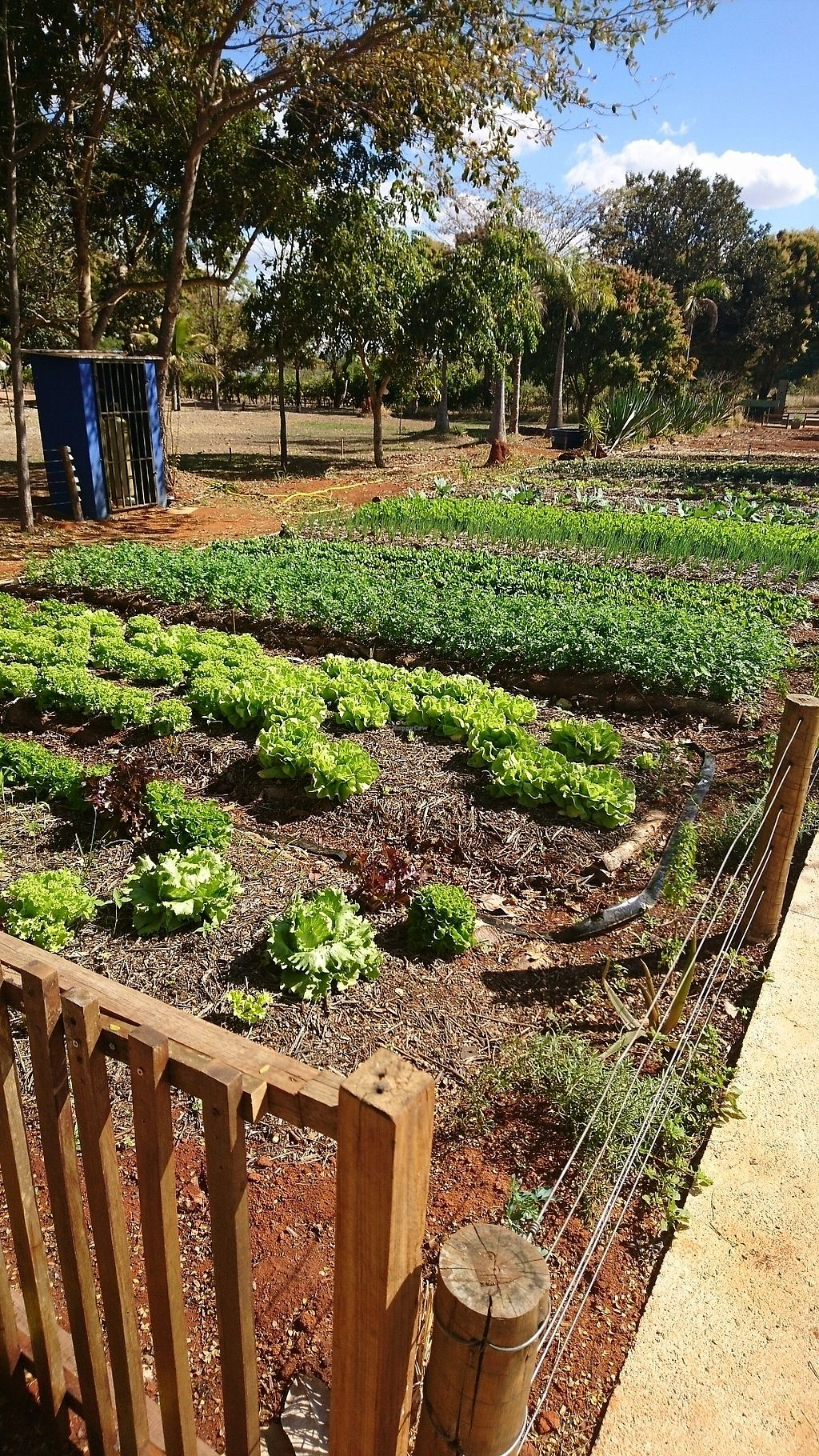 """Photo of Villa Vegana  by <a href=""""/members/profile/cookiemonster_ontour"""">cookiemonster_ontour</a> <br/>vegetable garden in front of the restaurant <br/> August 28, 2017  - <a href='/contact/abuse/image/79144/298127'>Report</a>"""