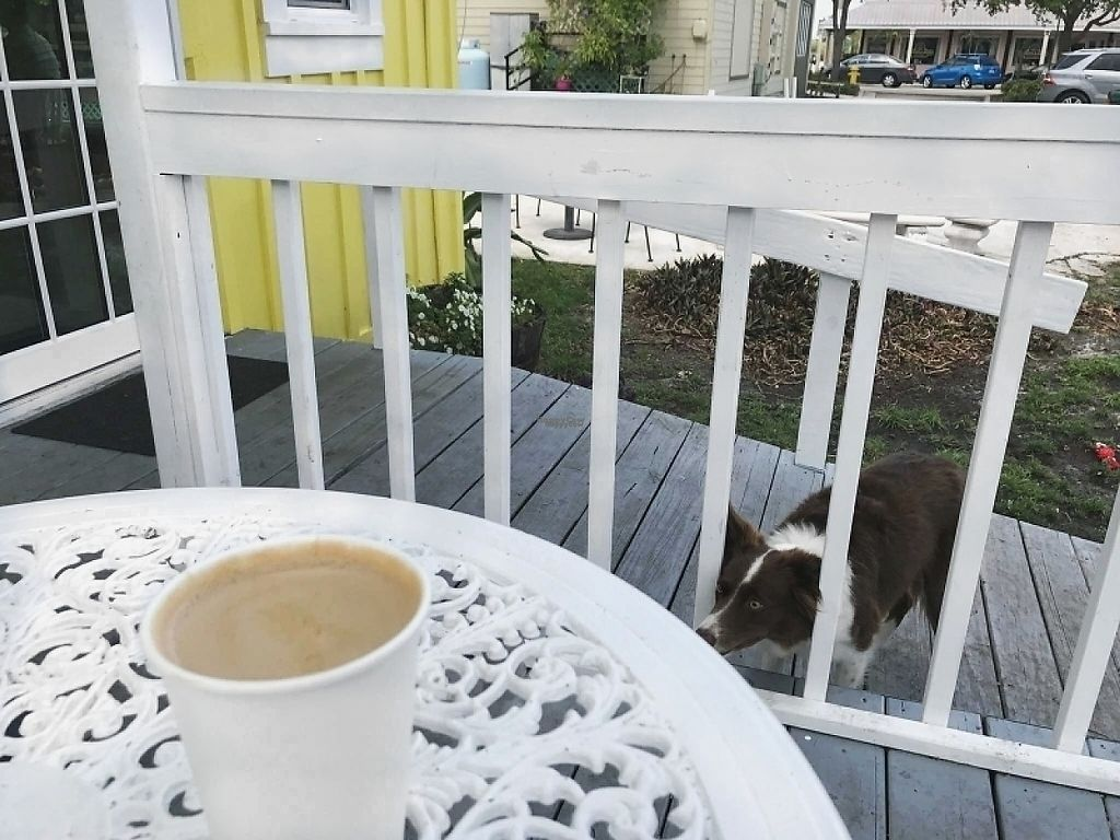 """Photo of Bunkhouse Coffee Bar  by <a href=""""/members/profile/Des_tiny_lee"""">Des_tiny_lee</a> <br/>lavendar latte and one precious pup <br/> April 18, 2017  - <a href='/contact/abuse/image/81026/249778'>Report</a>"""